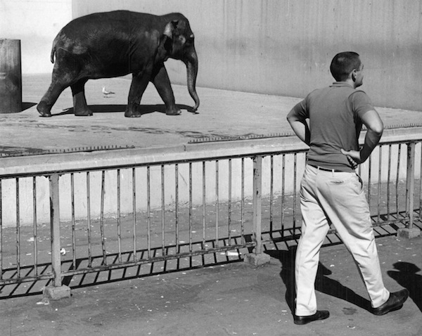 Elephant_San_Francisco_1965