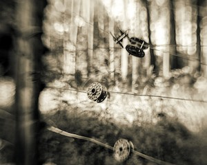C.Royal-Fence_in_Pines-2