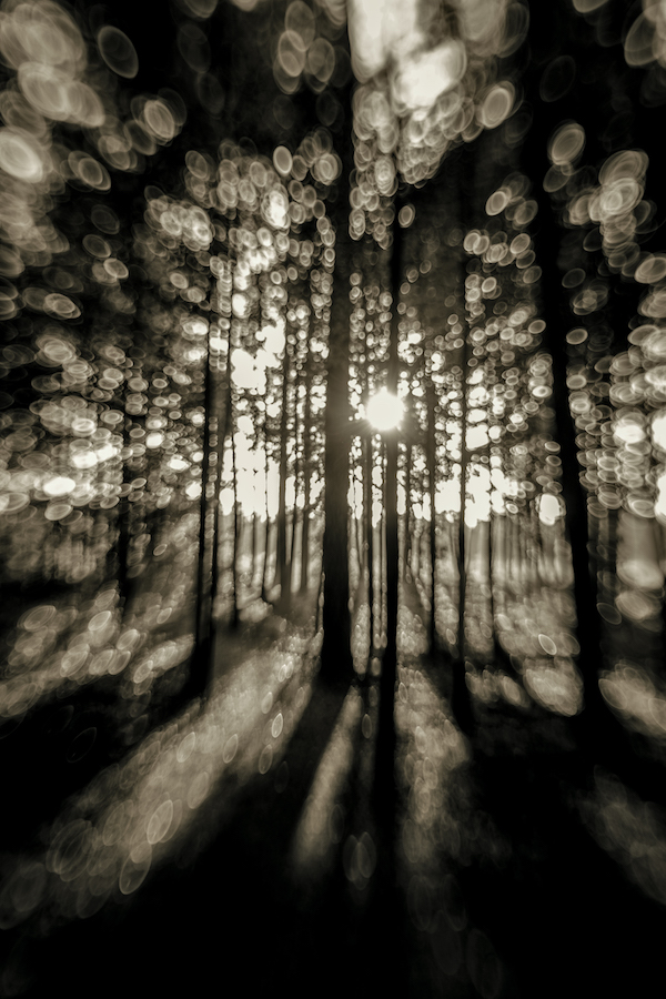 Into the Shadowy Pines
